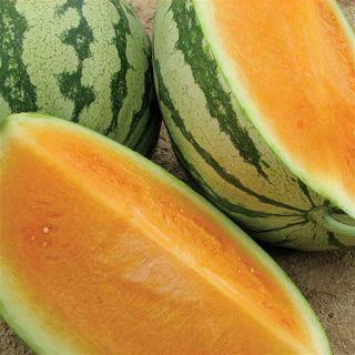 Orange Crisp Hybrid Seedless Watermelon Seeds Image