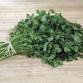 Italian Plain Leaf Parsley Seeds Image