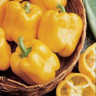 Early Sunsation Hybrid Pepper Seeds Image