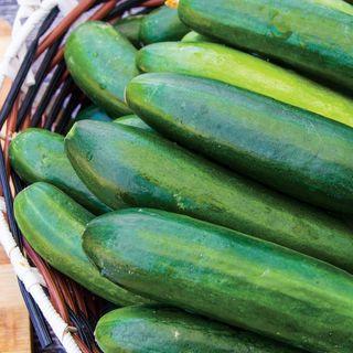Sir Crunch a Lot Hybrid Cucumber Seeds Image