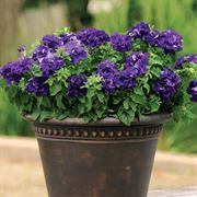 Double Cascade Blue Double Petunia Seeds Alternate Image 1