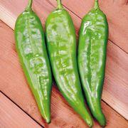 Sahuaro Hybrid Pepper Seeds Thumb