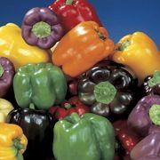 Park's Sweet Rainbow Mix Pepper Seeds Alternate Image 1