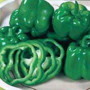California Wonder Pepper Seeds Thumb