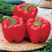 Karma Hybrid Pepper Seeds Thumb