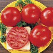Celebrity Hybrid Tomato Seeds Alternate Image 1