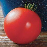 Mountain Fresh Hybrid Tomato Seeds Thumb