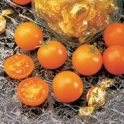 Sunsugar Hybrid Tomato Seeds Thumb