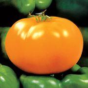 Carolina Gold Hybrid Tomato Seeds Thumb