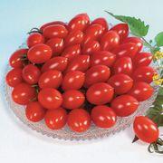 Sugary Cherry Tomato Seeds Thumb