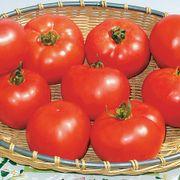 Amelia Vr Hybrid Tomato Seeds Thumb