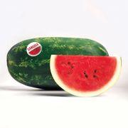 Sangria Hybrid Watermelon Seeds Thumb