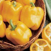 Early Sunsation Hybrid Pepper Seeds Thumb