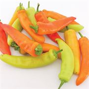 Hungarian Wax Organic Pepper Seeds Alternate Image 1
