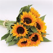 Zohar F1 Organic Sunflower Seeds Thumb
