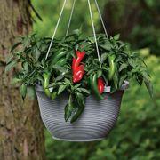 Pot-a-Peño Pepper Seeds Thumb