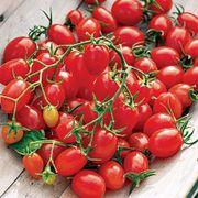 Fantastico Hybrid Grape Tomato Seeds Thumb