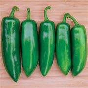 Tricked You Hybrid Pepper Seeds Thumb