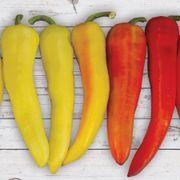 Sweet Sunset Hybrid Pepper Seeds Thumb