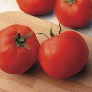 Big Yummy Hybrid Tomato Seeds Thumb