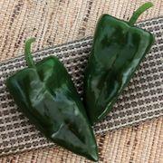 Trident Hybrid Pepper Seeds Thumb