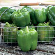 Park's Whopper II Hybrid Bell Pepper Seeds Alternate Image 2
