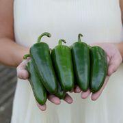 Park's Whopper Jalapeño Pepper Seeds Alternate Image 2