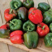 Karisma Pepper Seeds Thumb
