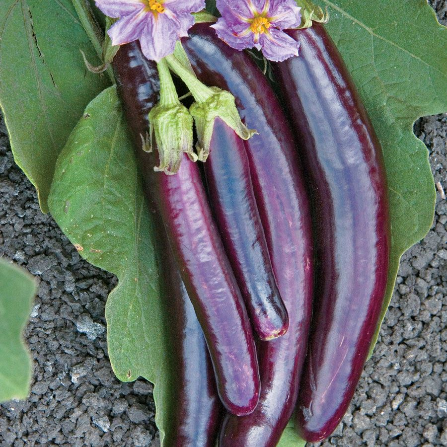 Hansel Hybrid Eggplant Seeds Image