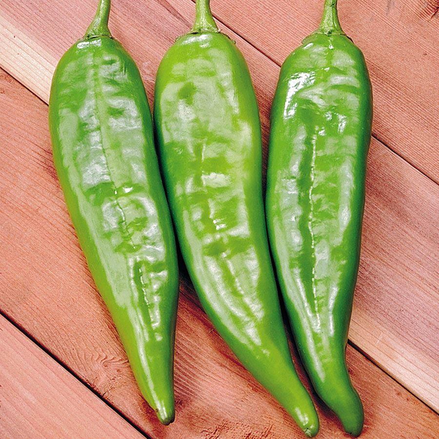 Sahuaro Hybrid Pepper Seeds Image
