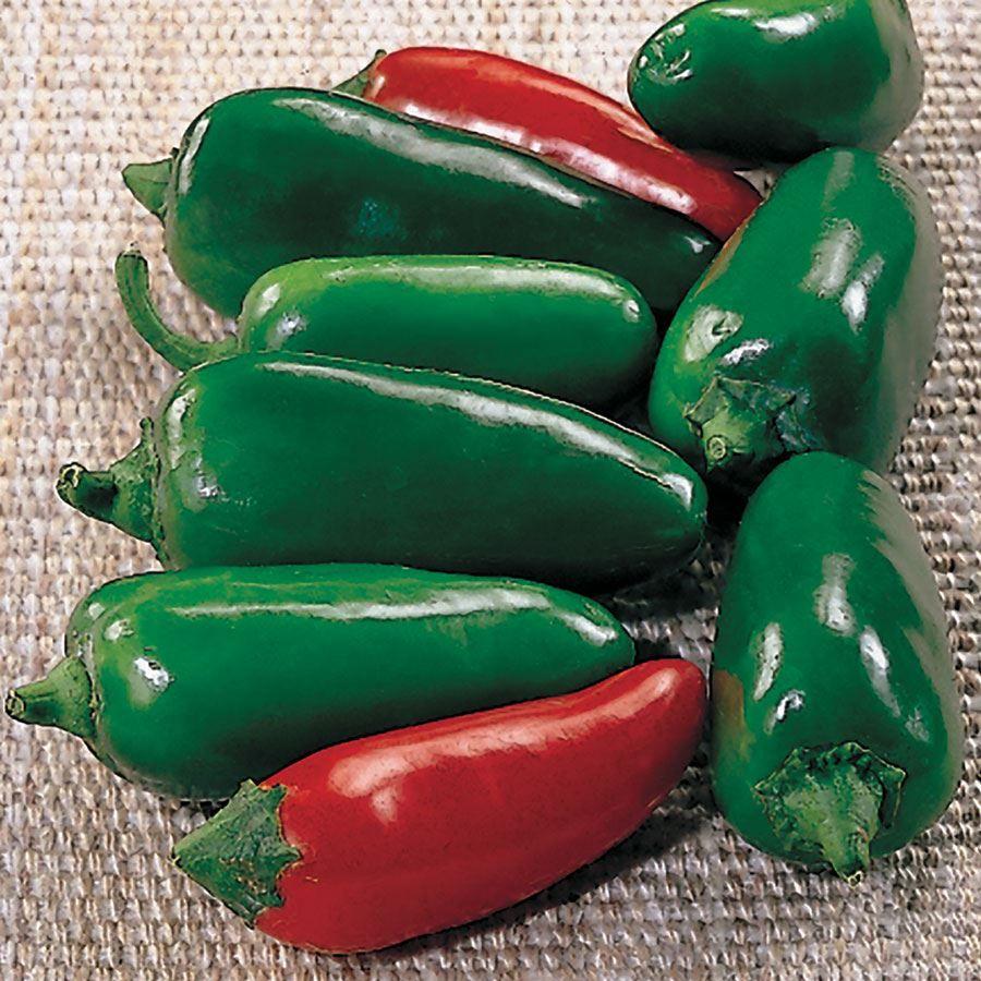 Jalapeño M Pepper Seeds Image