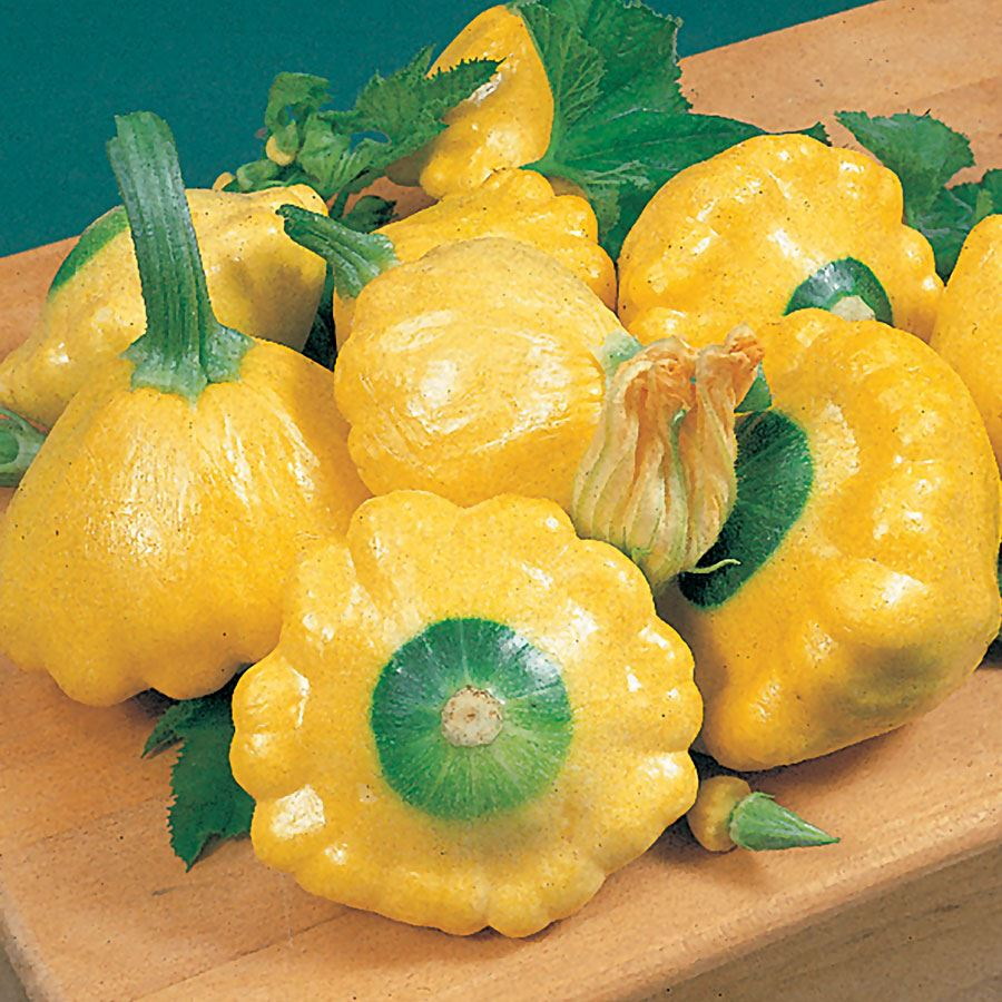 Sunburst Hybrid Squash Seeds Image