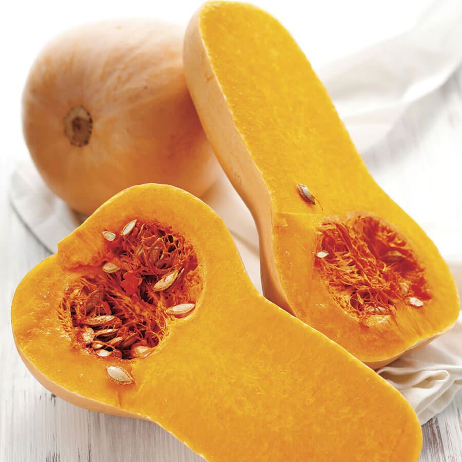 Early Butternut Hybrid Winter Squash Seeds Image