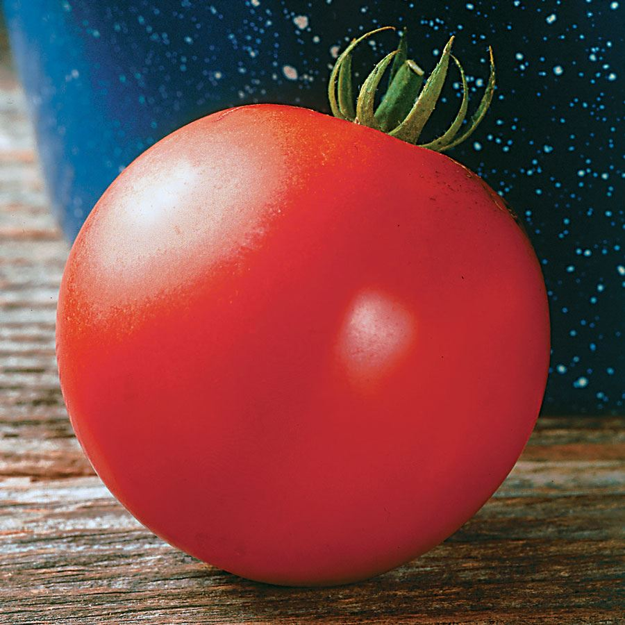 Mountain Fresh Hybrid Tomato Seeds Image