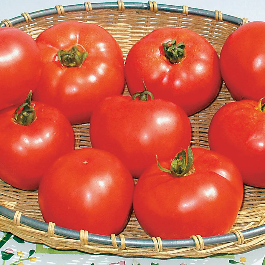 Amelia Vr Hybrid Tomato Seeds Image