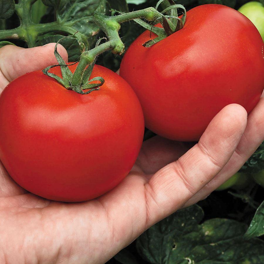Mega Bite Hybrid Tomato Seeds Image