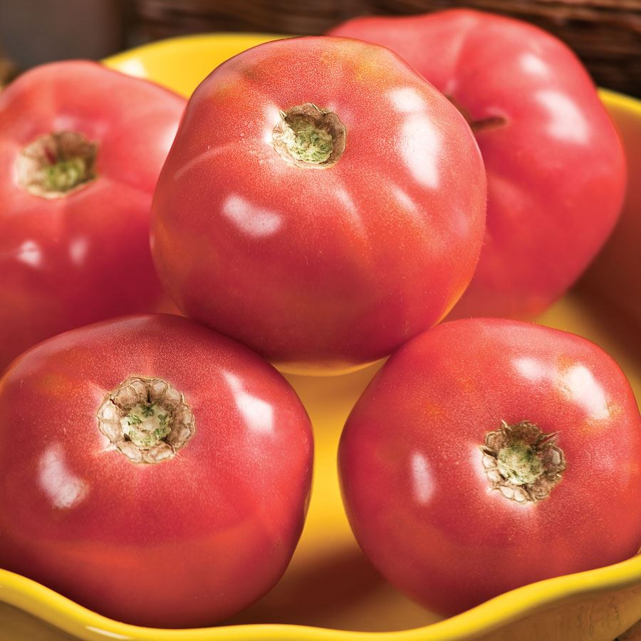 Pink Girl Hybrid Tomato Seeds Image