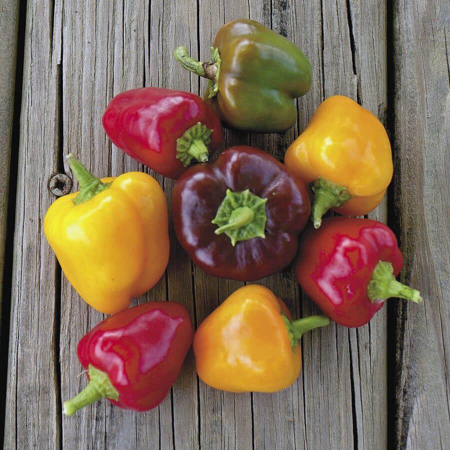 Petite Colour Blend Hybrid Pepper Seeds Image
