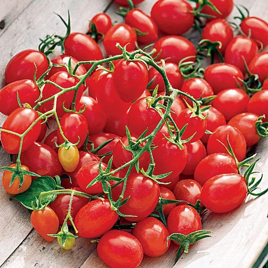 Fantastico Hybrid Grape Tomato Seeds Image
