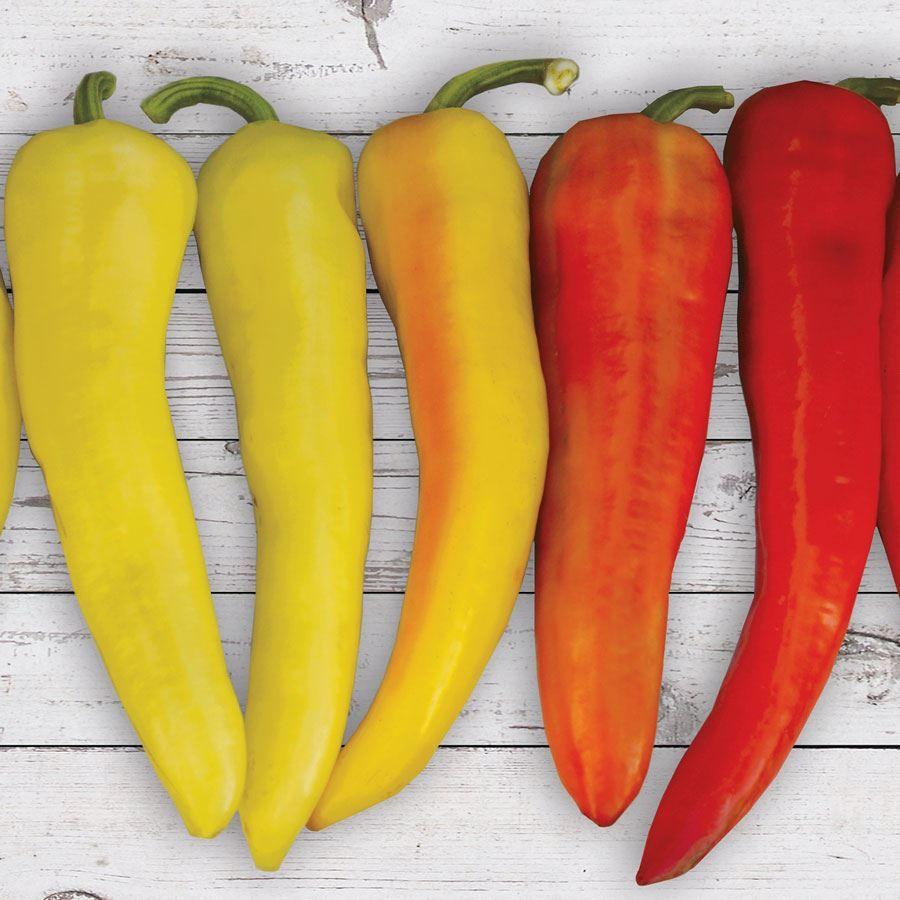 Sweet Sunset Hybrid Pepper Seeds Image