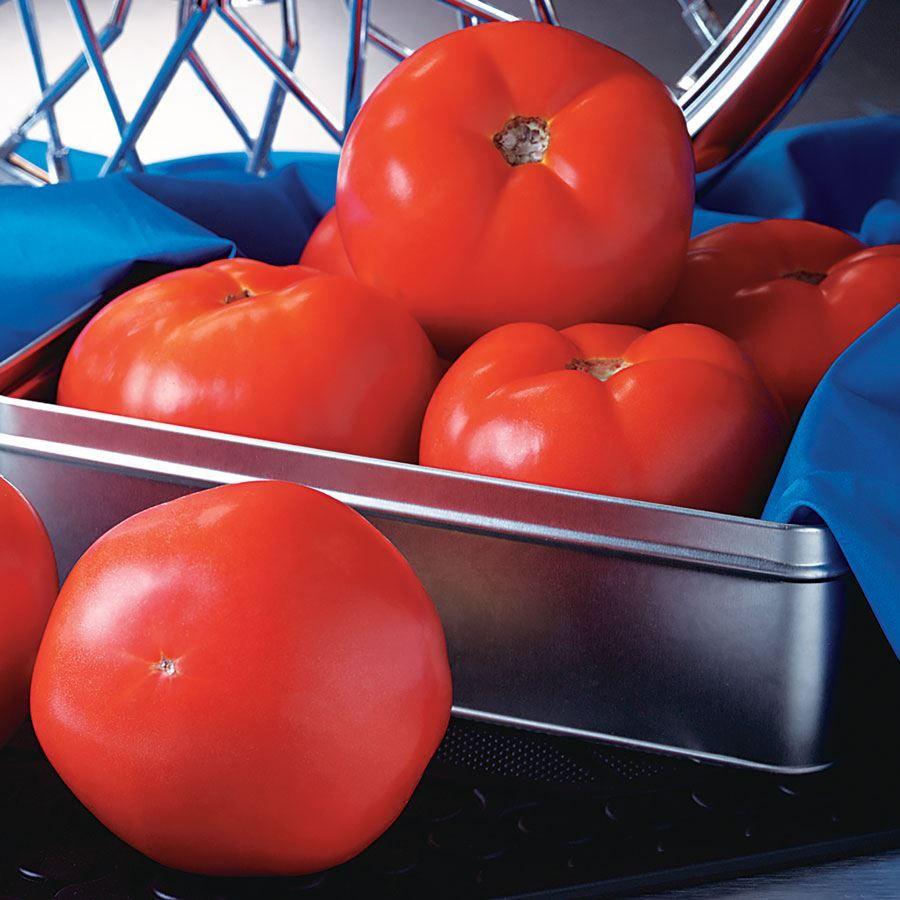 Rocky Top Tomato Seeds Image