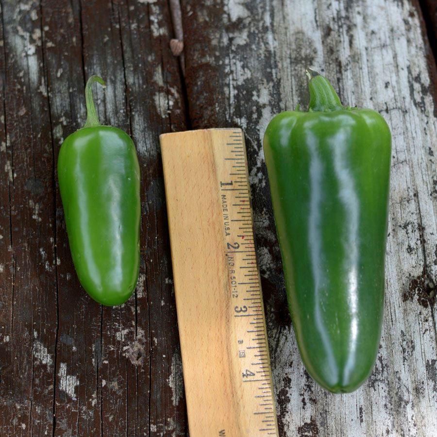 Park's Whopper Jalapeño Pepper Seeds Image