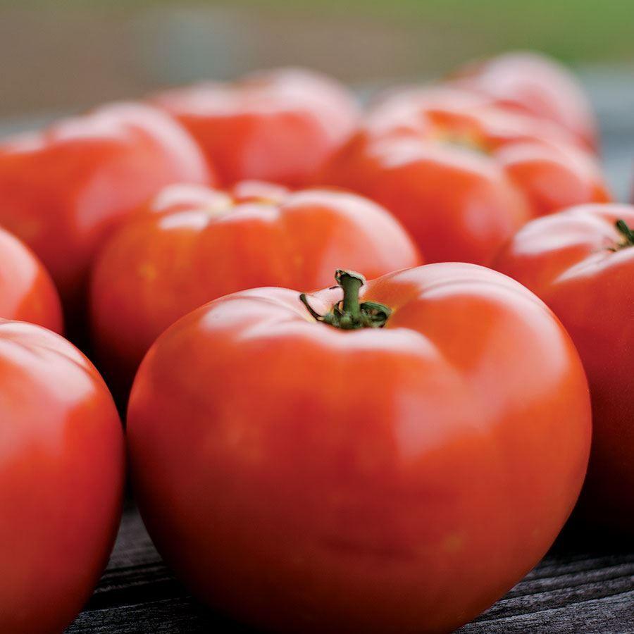 Park's Legacy Tomato Seeds Image