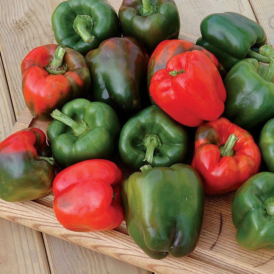 Karisma Pepper Seeds Image